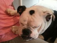Blue is a AWESOME bully girl. great with kids and house