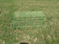 Beautiful 1st and 2nd cutting alfalfa hay. Price is