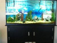 I have a Beautiful 55 gallon fish tank that I need out