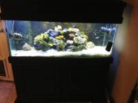 Up for sell is a beautiful 75 gallon glass saltwater