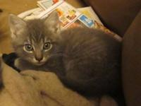 Three pretty 8 week old female kittens. Very sweet and