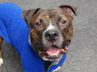 Benny is located at Manhattan Animal Care and Control.