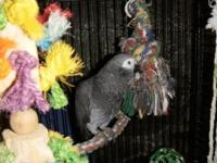I have a African Grey Timneh, hatch date is 05-21-2011,