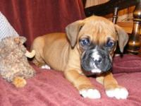 You have to come and meet these two boxer puppies. They