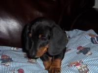 I have one male and 3 female black and tan smooth coat