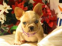 **Available for Christmas!!** This is Lovie! She is