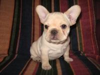 I have four beautiful AKC French Bulldog puppies