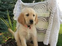 We have beautiful Golden Retriever Puppies ready for