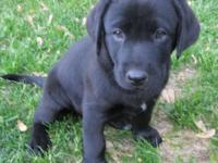 We have 3 very nice puppies available from a litter of