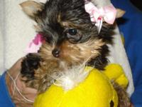 Beautiful Yorkshire Terrier puppies. 2 females and 1