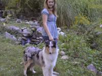 She is a beautiful, friendly and family collie with