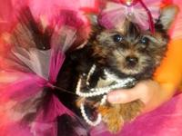 I have a GORGEOUS 10 week old Yorkshire Terrier puppy