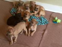 We have 6 males and 2 females left from a litter of 11.