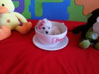 I have 4 beautiful and Tiny maltipoo puppies: 2 females