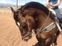 Beautiful Dunn AQHA quarter horse stallion. Spins,