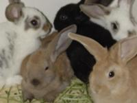 Description Beautiful Baby Bunnies for Kids to Love!