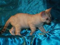 We have 2 male Bengals available. They are such love