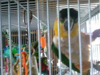 I have some birds I require to sale,. 2 sun conjures. 2