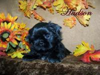 Hudson is an adorable little black male. He was born on