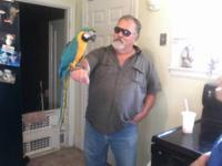 Trixie is a blue and gold macaw.. she is 11 years old