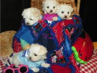 We are a small time breeder located in Indiana. We