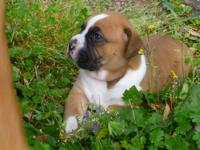 I have 4 beautiful boxer puppies that need loving