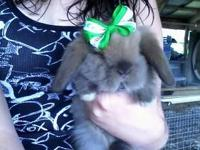 We have lots of beautiful baby rabbits for sale! We