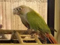 I have a really nice young conure. And very nice cage.
