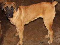 Due to illness Kilimanjaro Cane Corso Breeders is
