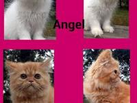 Ella our Beautiful red tabby and Angel our sweet Cream
