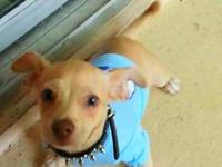 I have a adorable chihuahua mix that has all his shots