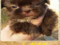 I have 5 beautiful shihtzus left for sale. Non losing