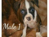 We have two female's and three male's available all the