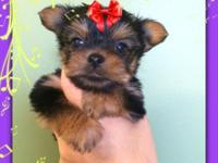 We have 2 beautiful female Yorkie puppies left that are
