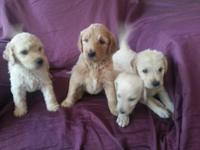 3 puppies left. $500 5038109211 - Curtis Our beautiful