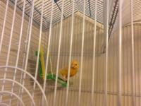 I have a beautiful female canary that I need to rehome.