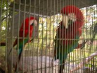 I have a beautiful female Catalina Macaw?She is very