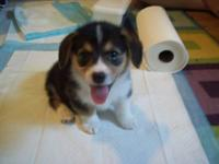 We are located in Southern Oregon and plan 2-3 litters