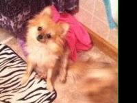 This is Jordie !! She is a 2 year old Pomeranian and is