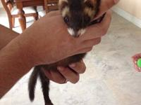 Hi guys, Must rehome sasha my gorgeous pet ferret due