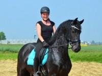 Outstanding Friesian gelding horse for adoption. He is