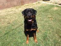 Our beloved Rottweilers, Achilles Von Ian and Isis Vom