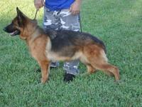 Jenna Diaz. Jenna is a 2 year old German Shepherd