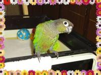 We have 6 beautiful baby Green-Cheek Conures, 1 is