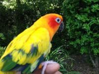 Need rehome a roughly 4-year-old Sun Conure parrot to