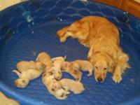 Yes we have PUPPIES!!!! We have 8 puppies Born April