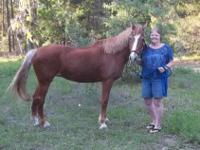 I have a 16 year young gorgeous Tennessee Walking Mare,