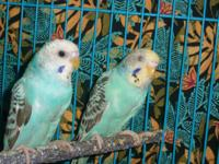 I have about 5 parakeets i need to locate a home for.