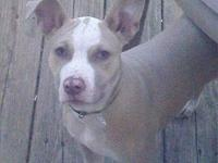 5 year old, male pitbull. Needs a home without children