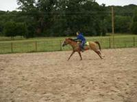 Missy is an 11 year old dunn mare. She is a 2D/3D